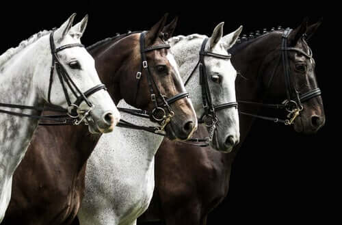Black and white horses in a line.