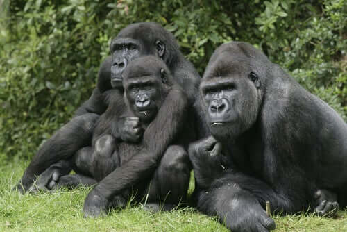 Differences Between Comparative Psychology and Ethology