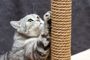 A cat scratching post.