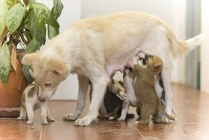 A dog with her puppies.