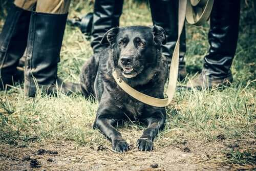 The History of Dogs in the Second World War