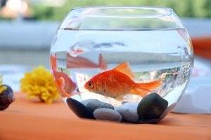 A goldfish bowl.
