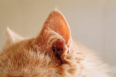 5 Useful Tips When Taking Care of a Deaf Cat