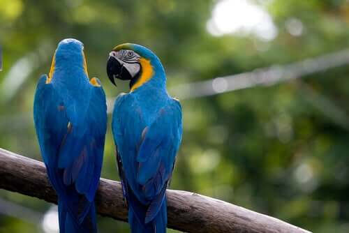 Parrots perched on a branch.