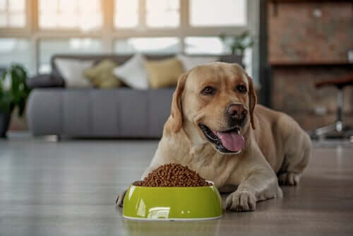 A happy dog with his bowl of food.