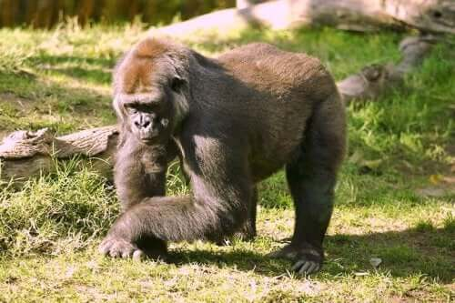 The 8 Strongest Animals In The World