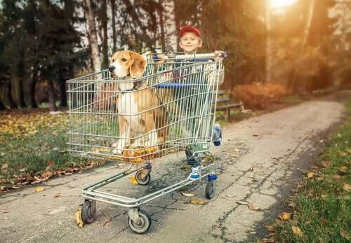A boy pushing a dog in a shopping trolley.