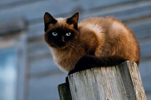 A cat on a post.