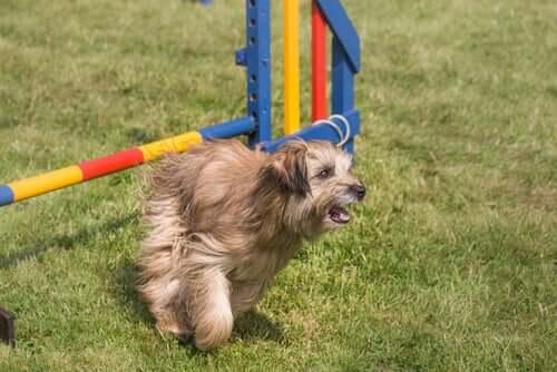 A dog running around.