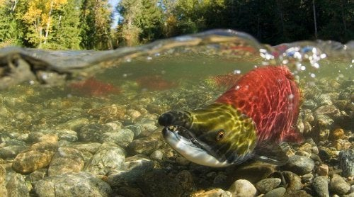 A fish underwater.