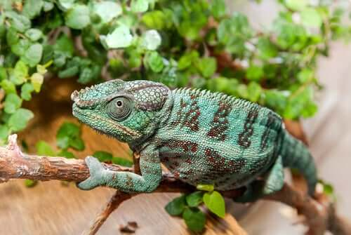 The Master Techniques of Animals that Camouflage Themselves