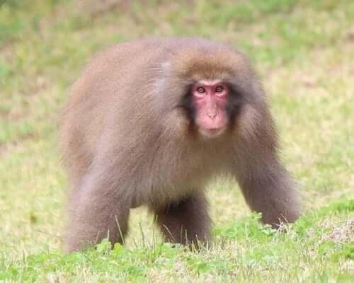 A monkey in a field.