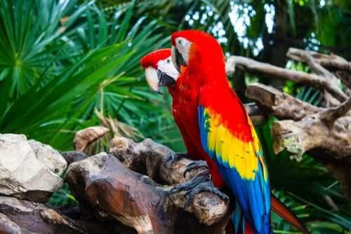 Talking Birds - Species and Characteristics