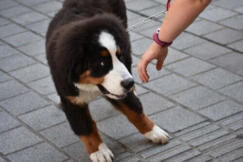 A person trying to steal a dog.