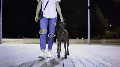 A person walking with a dog.