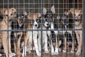 Stray dogs in an animal shelter.