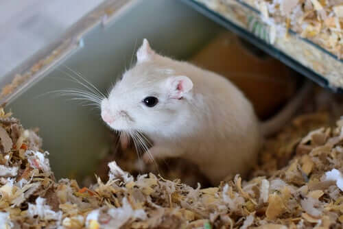 How to Choose the Right Cage for a Pet Gerbil