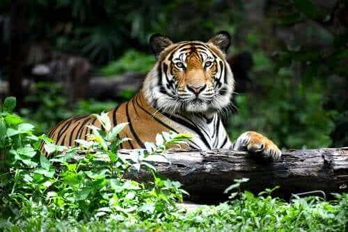 10 Species at Risk of Extinction