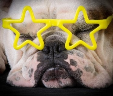 Social Media Stars and Animal Rights
