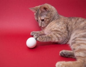 A cat playing with an egg.