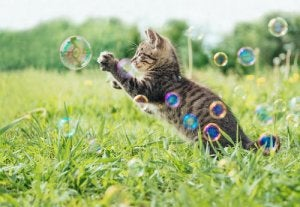 A kitten playing with bubbles.