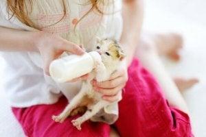 Bottle-feeding a kitten.