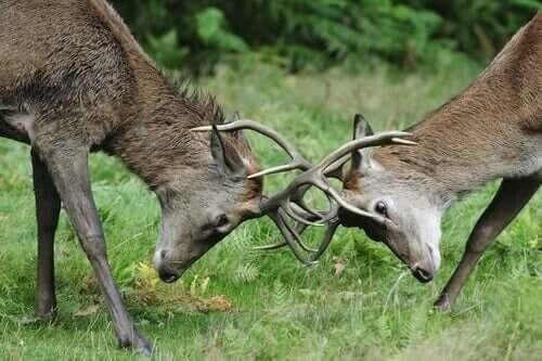 Competition Between Herbivores In The Wild