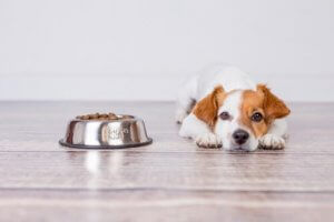 Choosing the right dog food.