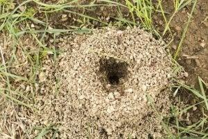 An anthill.