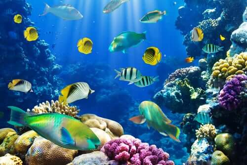 6 Interesting Facts About Fish