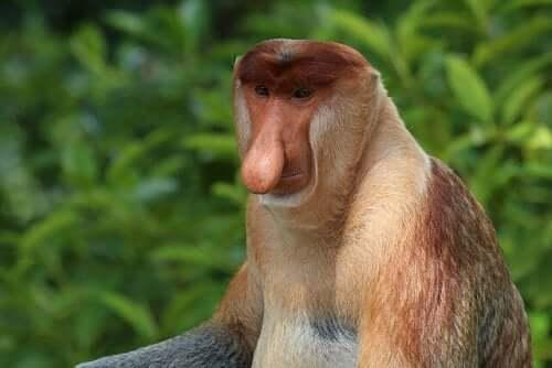 Meet 8 Amazing Monkey Species