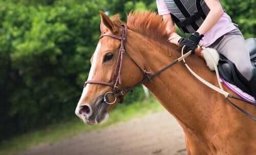 A horse being ridden.