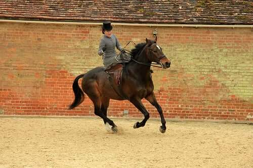 How to Train Your Horse for a Competition