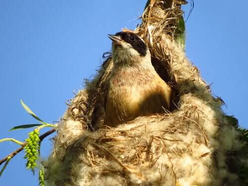 How Do Birds Actually Build Their Nests?