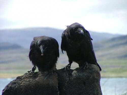 A couple of birds on a rock.