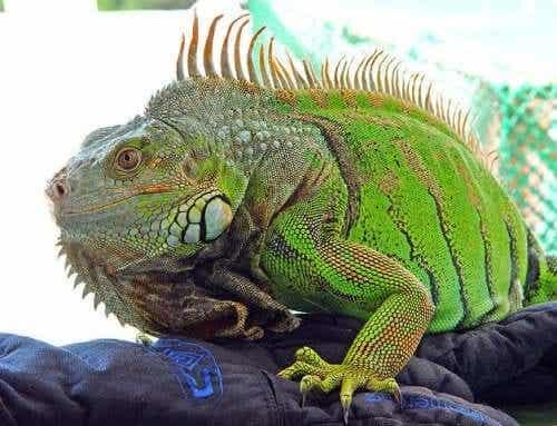 Metabolic Bone Disease in Reptiles