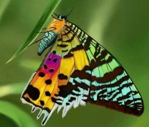 A colorful butterfly.