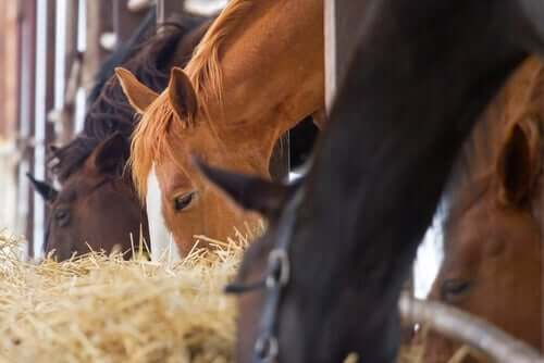 Horses eating horse supplements.