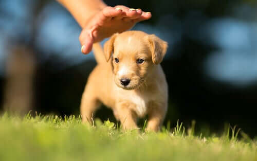 A puppy playing outside.