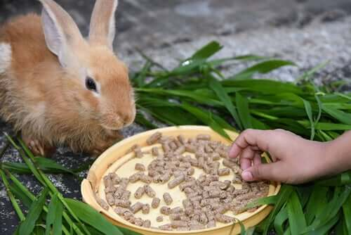 A rabbit eating.