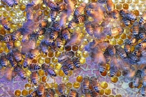 The Amazing and Complex Social Structure of Bees