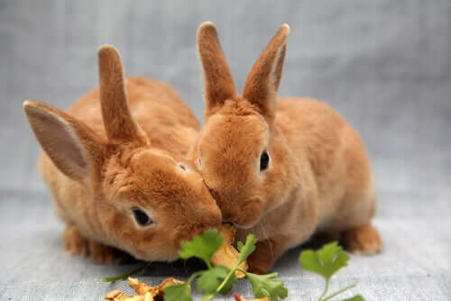 Two bunnies eating their meal.