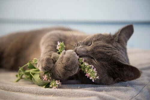 A cat playing with catnip.