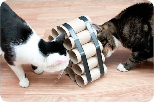 Cats playing with toilet paper rolls.