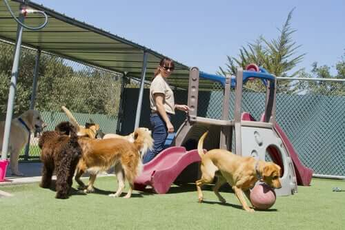 A dog pack playing in the playground.