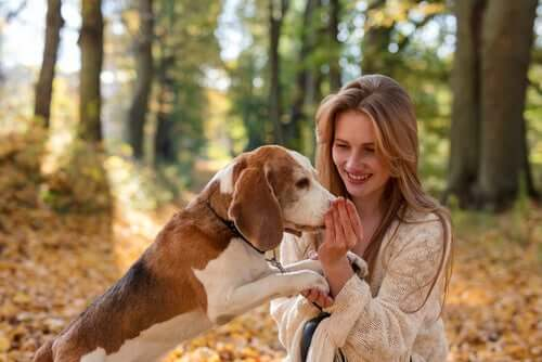 A dog sniffing a woman's hand.