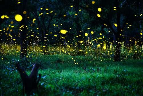 Lightning Bugs: Characteristics, Diet, and Habitat