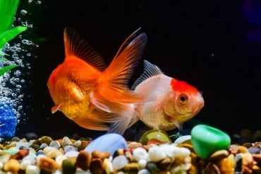 Discover the Best Fish Food Tips