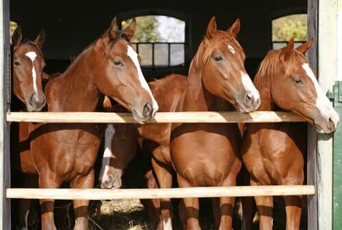 Tips and Considerations Regarding the Breeding of Horses