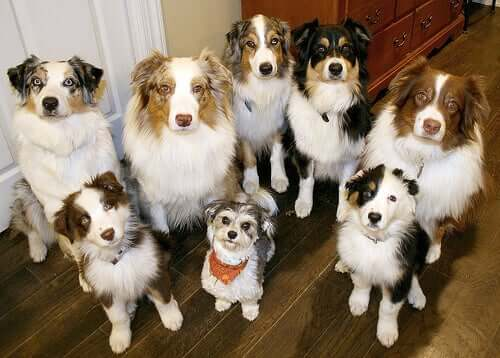 Is It Possible to Clone Dogs?